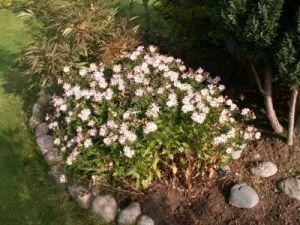 Planter til haven